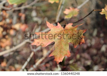 Fall Leaves Changing Colors #1360440248