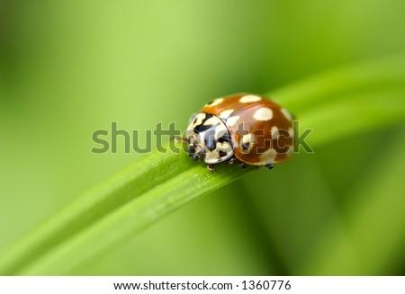 Ladybird sitting on a leaf #1360776