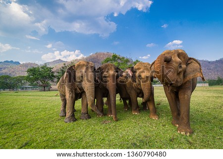 The leader of wild elephant calls the herd to the jungle,elephant herds are led by a female elephant,Cute elephant family,elephant family enjoying life,asian elephants in nature park #1360790480