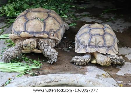 Big turtles in zoo  #1360927979