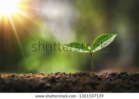 young tree growing in garden with sunrise. eco concept earth day #1361107139