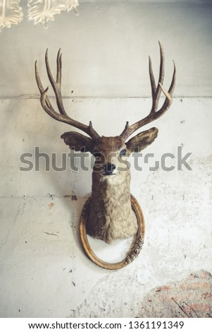 Deer head on the wall. Taxidermy animal of a deer head and vintage frame on the old rotten brick wall. Vintage style. #1361191349