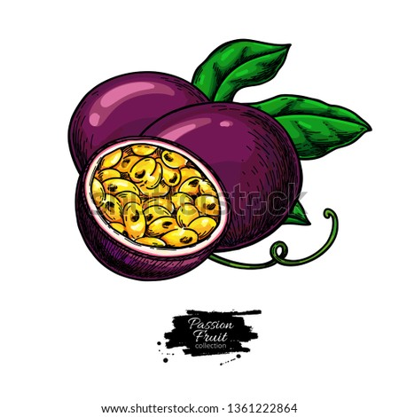 Passion fruit vector drawing. Hand drawn tropical food illustration. Summer passionfruit. Whole and sliced maracuya with leaves. Botanical sketch for label, juice packaging design #1361222864