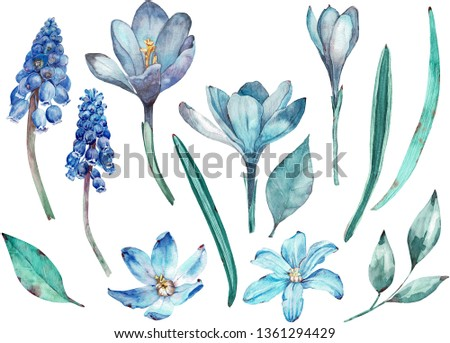 Blue spring flowers clip-art. Separate elements of flowers and leaves isolated on white background. Hand-drawn watercolor illustration.