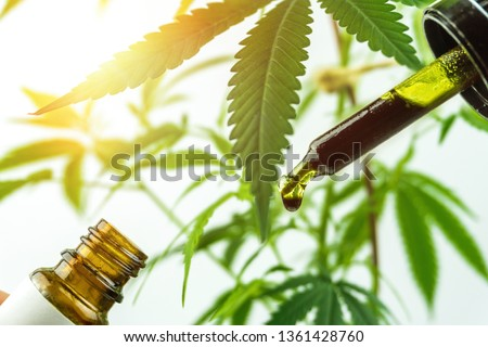 Hand holding bottle of full spectrum Cannabis oil in dropper against cannabis plant. Close up #1361428760