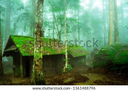 Wooden abandoned cottage / hut / house in the deep forest jungle with wet and fresh environment of raining. Blue light shade. Noise photo.