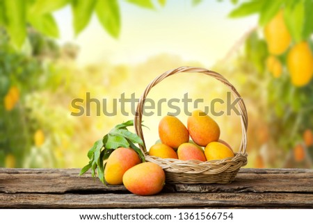 Mango in basket with leaves on wooden table and Mango tree farm with sunlight background. #1361566754