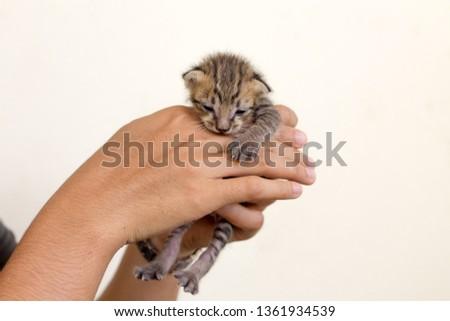 Newborn kitten in woman hands. #1361934539