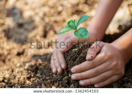 Hands protect trees, plant trees,  plant trees to reduce global warming, Forest conservation, World Environment Day. #1362454103