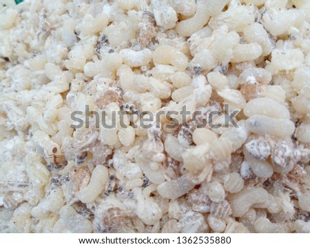 Ant egg (Red ant eggs) is food #1362535880