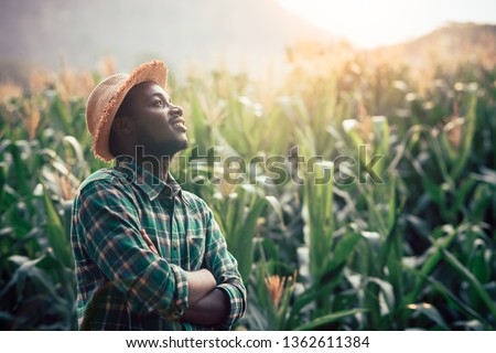 African Farmer with hat stand in the corn plantation field Royalty-Free Stock Photo #1362611384