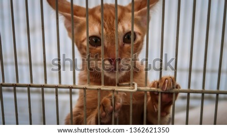 Sad abandoned cat in cage.