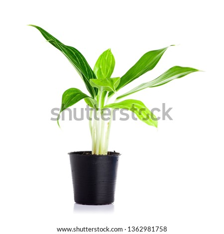 Plant in pot isolated on white background. #1362981758
