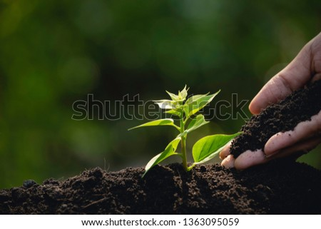 Close up hand of person holding abundance soil to young plant for agriculture or planting peach. #1363095059