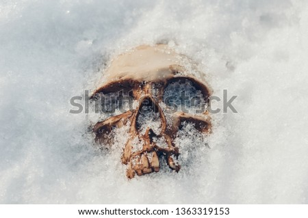 skull covered with snow and ice.  human skull. buried human remains Royalty-Free Stock Photo #1363319153