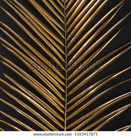 Golden painted date palm leaf closeup on dark black background isolated. Empty space, room for text. Minimalist style luxury wedding banner, invitation card template. #1363417871