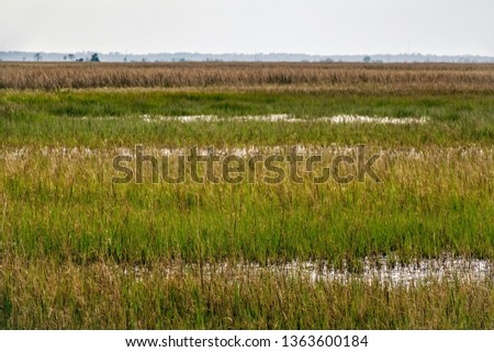 Tidal wetland on Jekyll Island, a barrier island on the Atlantic coast of Georgia, for coastal and environmental themes #1363600184