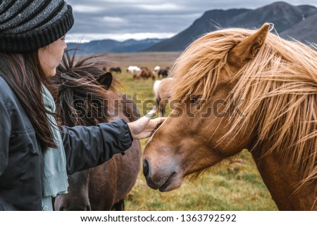 Icelandic horse in the field of scenic nature landscape of Iceland. The Icelandic horse is a breed of horse locally developed in Iceland as Icelandic law prevents horses from being imported. #1363792592