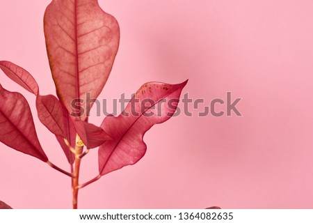 Croton flowerpot leaves #1364082635