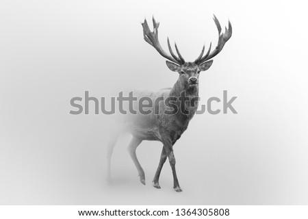Red deer nature wildlife animal walking in a fog background #1364305808
