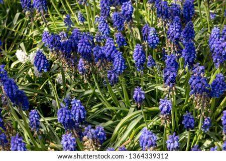 Purple Wild Flowers in Spring #1364339312