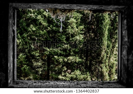 Window in an abandoned building. It overlooks the green forest. #1364402837
