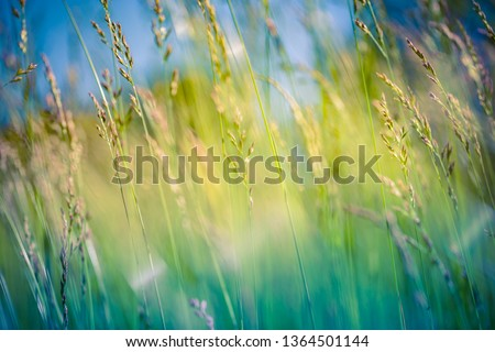 Beautiful close up ecology nature landscape with meadow. Abstract grass background. Abstract natural freshness with beauty blurred bokeh environment. Inspirational nature concept