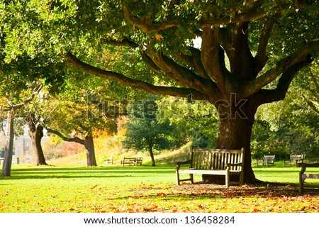 Bench under the tree in the Royal Botanic Gardens in London