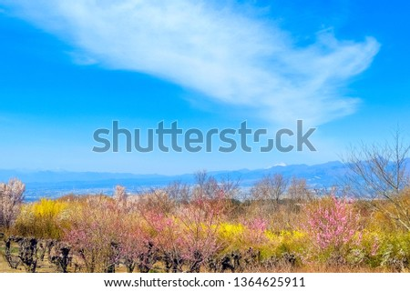 The view of the flower garden and Snow Mountain #1364625911