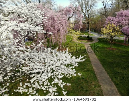 Beautiful white and pink cherry blossom at Brandywine Park, Wilmington, Delaware, U.S.A #1364691782