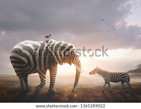 A surreal image of an African elephant wearing black and white zebra stripes Royalty-Free Stock Photo #1365289022
