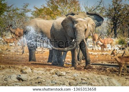 Elephant jokes with water in his trunk Etosha National Park, Namibia, Africa Royalty-Free Stock Photo #1365313658