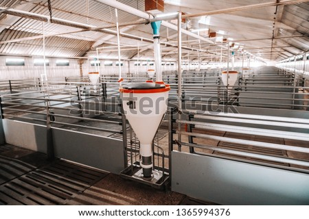 Picture of clean empty pig stall.