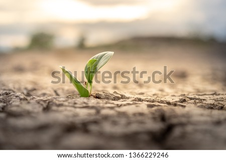 Tree growing on cracked ground. Crack dried soil in drought, Affected of global warming made climate change. Water shortage and drought concept #1366229246