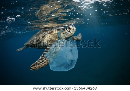 Underwater concept of global problem with plastic rubbish floating in the oceans. Hawksbill turtle in caption of plastic bag Royalty-Free Stock Photo #1366434269