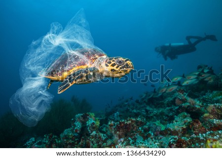 Underwater concept of global problem with plastic rubbish floating in the oceans. Hawksbill turtle in caption of plastic bag Royalty-Free Stock Photo #1366434290