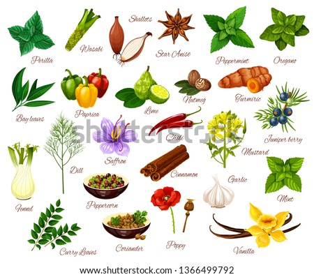 Spices and cooking herbs, herbal and vegetable or fruit seasonings. Vector culinary condiments perilla, wasabi or shallot and anise, oregano with paprika or lime and mustard, juniper berry and vanilla #1366499792