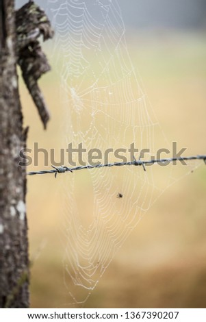 A spider web with its spider next to a field in the French country #1367390207