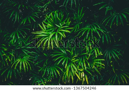 Fresh green leaves vertical copy space background Summer tropical for use in the design banner. #1367504246