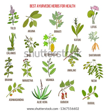 Ayurvedic herbs, natural botanical set. Hand drawn vector illustration #1367556602