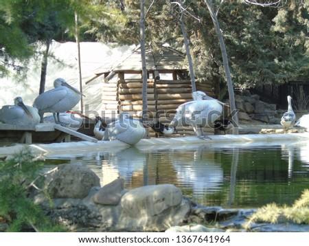 Birds in birds garden in Tehran(pelican) #1367641964