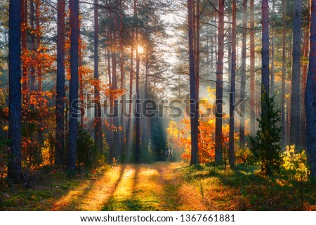 Fall. Fall forest. Forest landscape. Autumn nature. Sunshine in forest. Sun shines through trees. Path in natural park with autumn trees. #1367661881