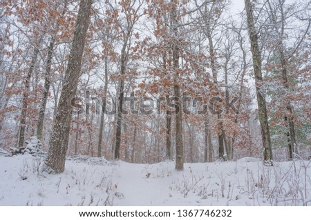Beautiful snowy winter forest in Governor Knowles State Forest in Northern Wisconsin #1367746232