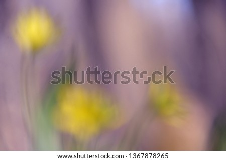 blurred flower in the Park #1367878265