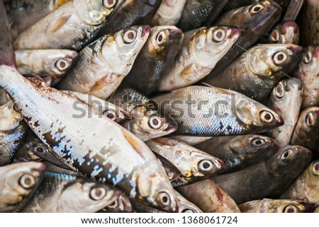 Fresh fish that just coming from the sea in Kendari Fish Market, South East Sulawesi, Indonesia. #1368061724
