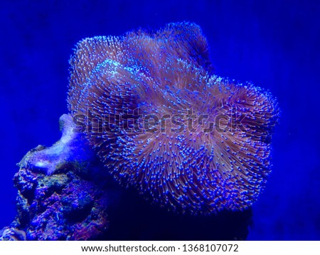 Reef tank fotoshoot #1368107072