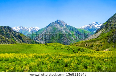 Mountain green valley landscape. Beautiful mountain green valley panorama. Mountain meadow flowers valley view. Mountain valley meadow flowers view #1368116843