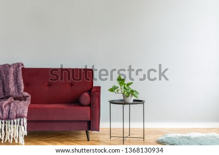 Minimalistic and luxury grey home interior with burgundy velvet design sofa, black coffe table with plant and elegant blanket. Copy space for inscription, mock up poster. Brown wooden parquet.  #1368130934