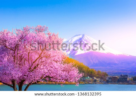 Mount Fuji and cherry blossoms which are viewed from lake Kawaguchiko, Yamanashi, Japan #1368132395
