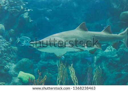 swimming shark image #1368238463
